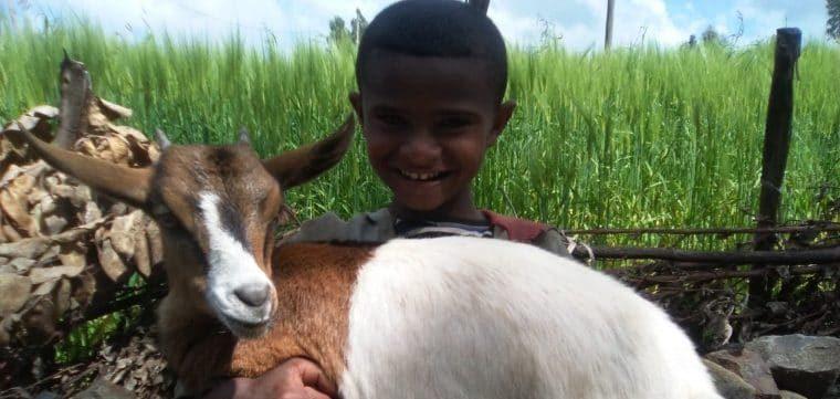 une chèvre pour faire le plein de calcium