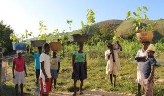 Aménagement innovant des bassins versants et sécurisation des productions agricoles en Haïti