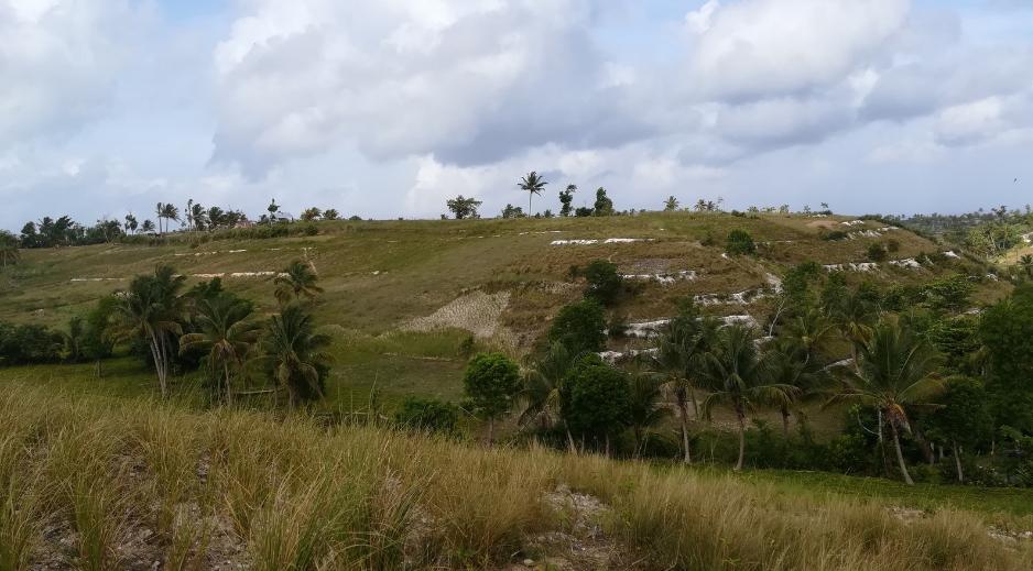 Favoriser le développement durable d'Haïti grâce au vétiver !