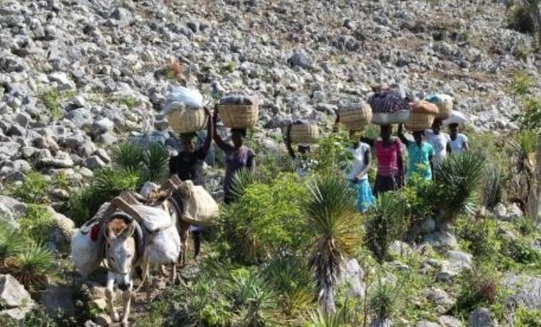 Haiti: de nouvelles cultures pour une meilleure alimentation