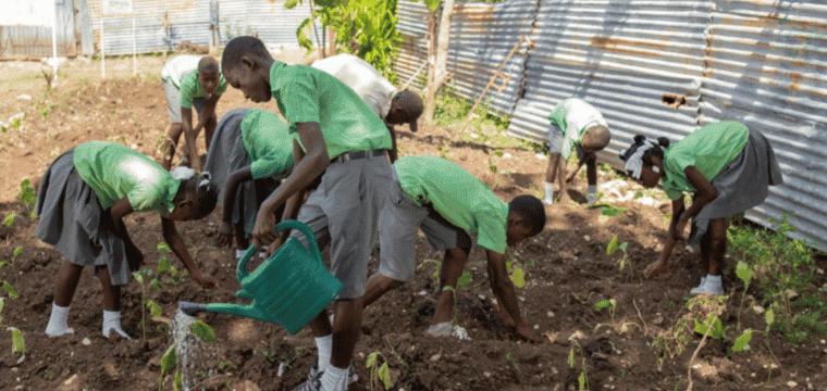 Haiti Sensibiliser les enseignants et leurs élèves à la préservation de l'environnement
