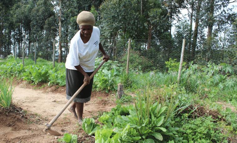 Brésil : Améliorer et renforcer la sécurité alimentaire et nutritionnelle des populations de São João da Chapada, Inhaí et Maria Nunes
