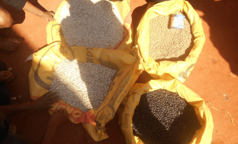 Madagascar : Des repas sains, variés et composés avec des produits locaux pour les élèves en période de soudure