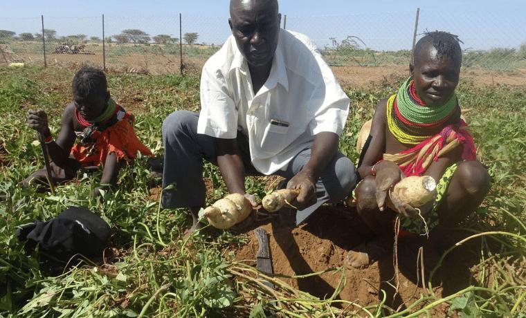 Un risque de pénurie alimentaire en Afrique avec l'invasion de criquets